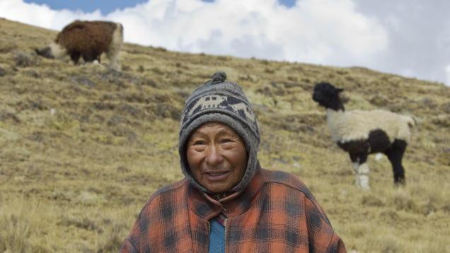 A Bolivian llama herder in the Antiplano region