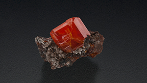A large red-orange crystal of wulfenite is nestled in the arms of matrix.