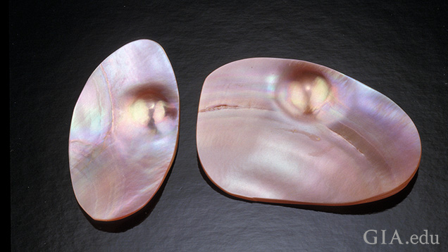 Cultured blister pearls from the pink heelsplitter
