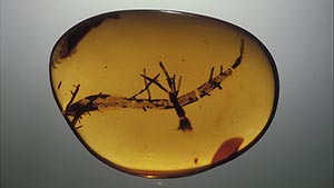 Free-form Amber Piece