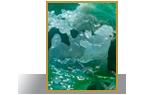 Spirit of Jadeite