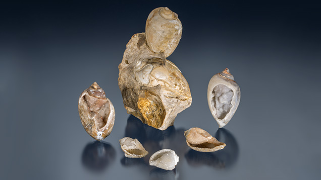 Fossilized drusy shells