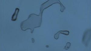 HOC合成アレキサンドライトのインクルージョン。