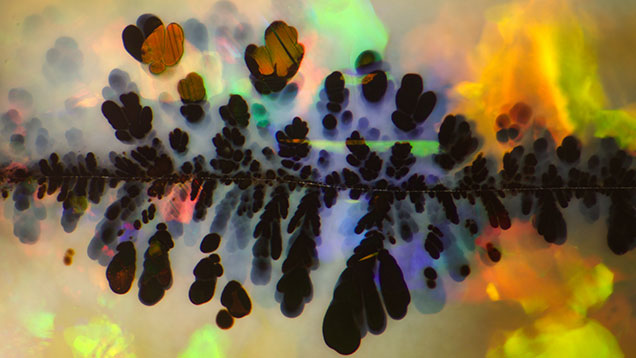 """Photomicrograph of black manganese oxide """"plumes"""" in an Australian opal"""