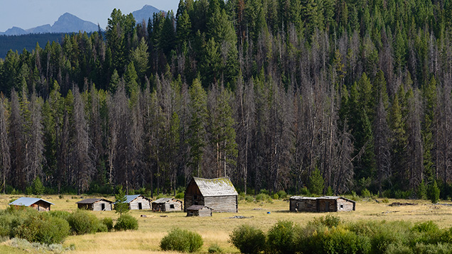 Cabins in a meadow