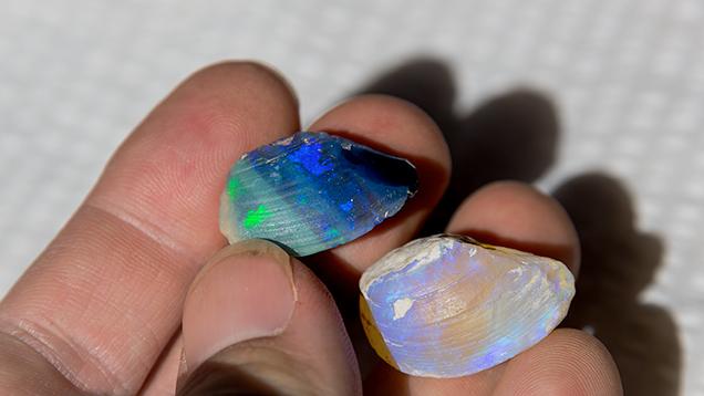 蛋白石化した2つの貝を持つ手