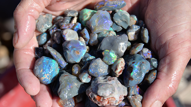 Hands holding black opal rough
