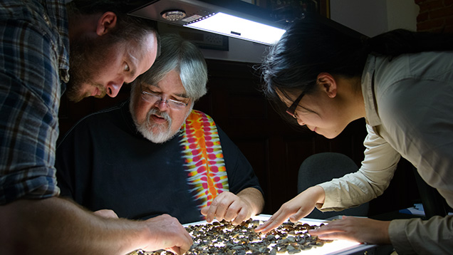 People searching for sapphires on a light table