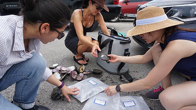 Three women sorting mussel samples