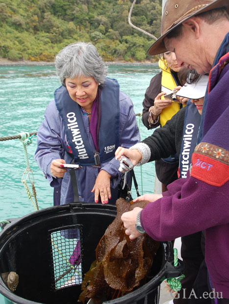 Woman holds a camera over a barrel as a man separates seaweed form abalone.