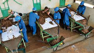 莫桑比克宝石加工厂