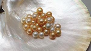 """关于识别经过黄色或""""金色""""染色处理的人工养殖珍珠的要点更新"""