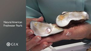 Hands hold a split open shell that shows the natural pearl.