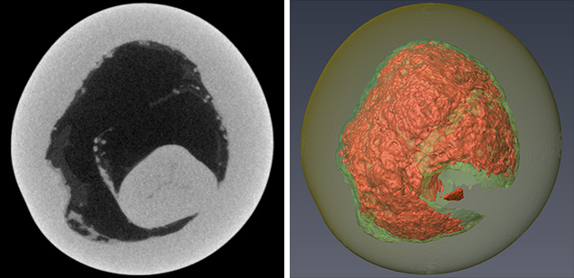 2-D (left) and 3-D (right) μ-CT slices of a pearl