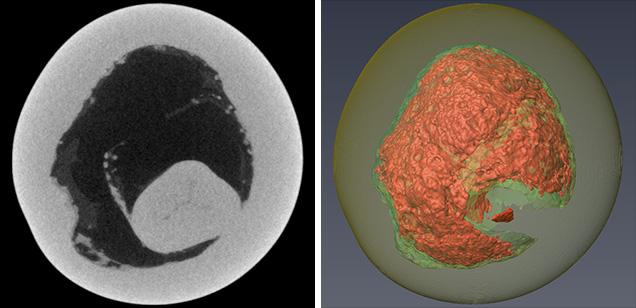 真珠の2Dμ-CTスライス(左)と3Dμ-CTスライス(右)