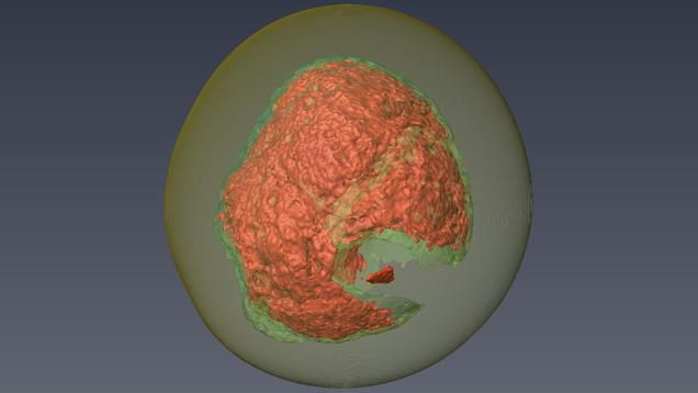 真珠用3Dモデリングソフトウェア