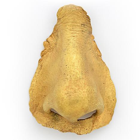 Gold cast of Lois Boardman's nose