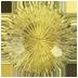 IMG - FA14 EQ - Chrysoberyl 18.46 72x72