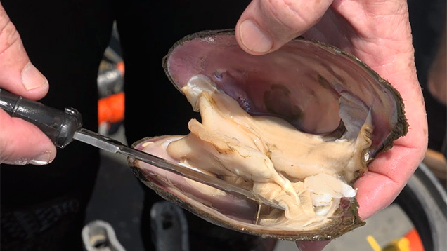 Quick anatomy video
