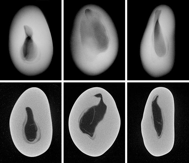 RTX and μ-CT images for non-bead-cultured pearl