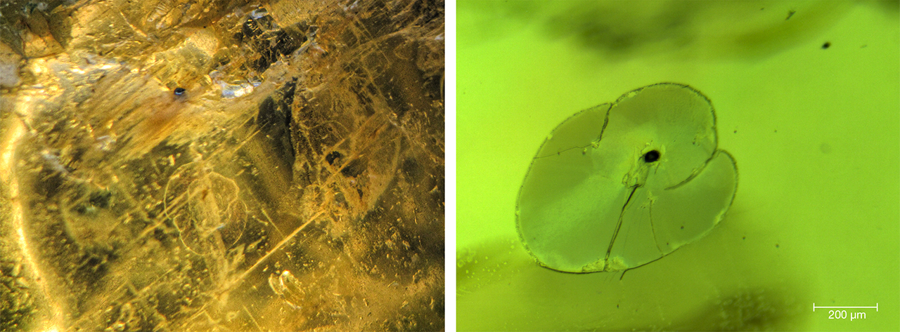 Internal features of peridot from Vietnam's Central Highlands