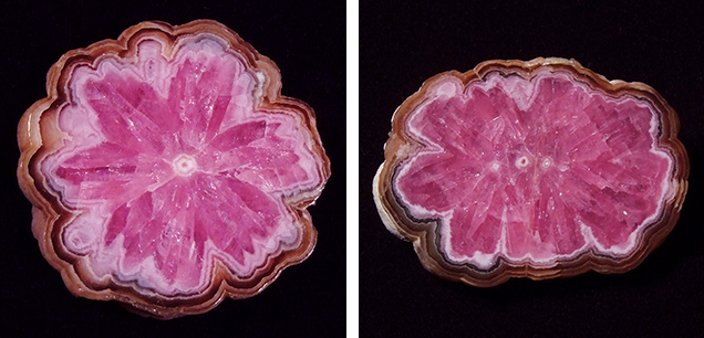 "Trapiche-like rhodochrosite ""flower"" from Capillitas mine, Argentina"