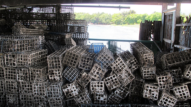 Baskets used for pearl culture on Lombok