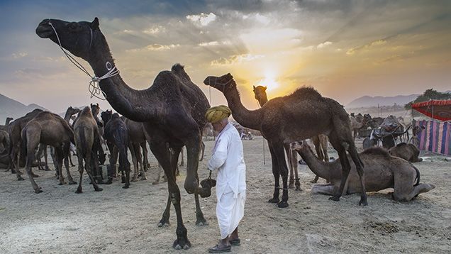 Camel fair in Rajasthan, India