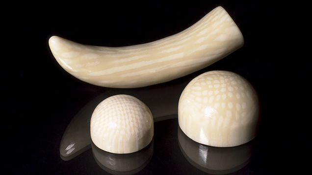 Ivory imitations carved from two materials for this study.