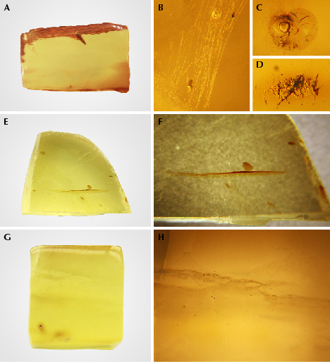Gemological characteristics of amber before hydrothermal treatment