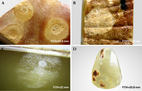 Features of hydrothermally treated spots on amber