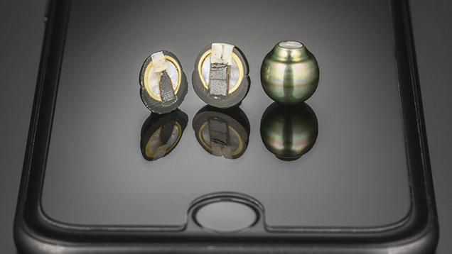 <i>Pinctada Margaritifera</i> bead cultured pearls, cut in half (left) and intact (right).