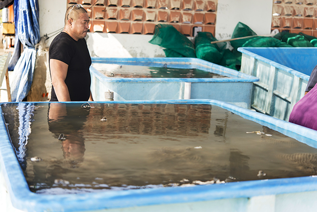 Placing saltwater mollusks in freshwater tanks