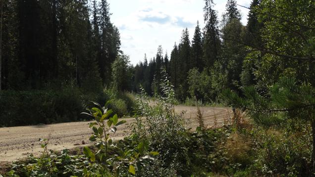 鉱山への道は、樺、モミ、トウヒやカラマツの森を通って続いています。
