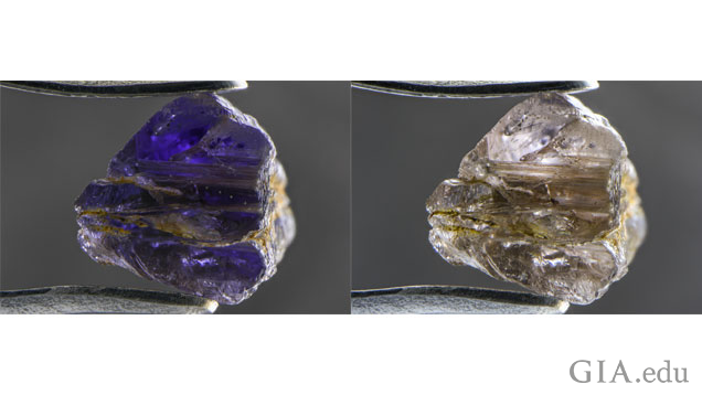 Johnkoivulaite shows strong pleochroism, going violet (left) to near-colorless (right) when examined with polarized light. Field of View:10.05mm. Photomicrographs by Nathan Renfro/GIA.