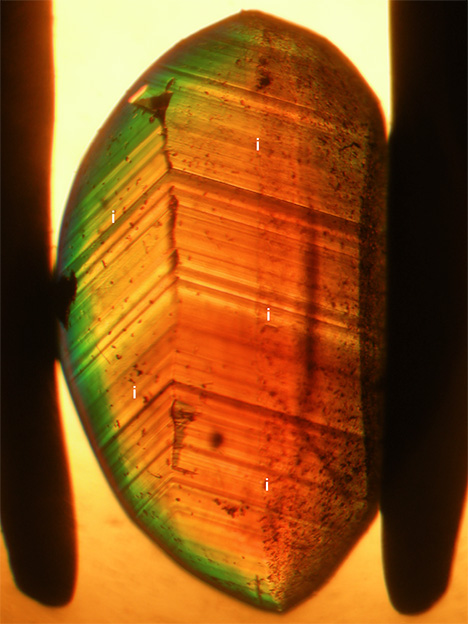 View in immersion of growth zoning of a chrysoberyl