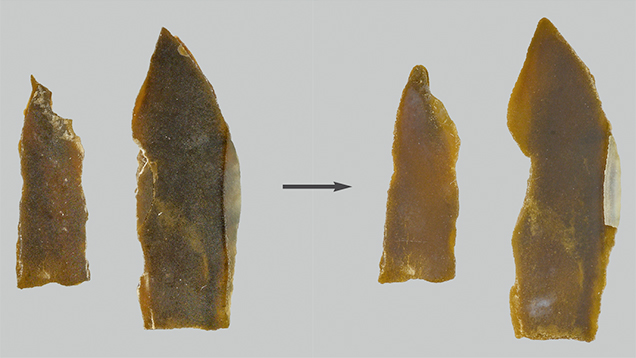 Pieces of <em>P. margaritifera</em> shell before and after bleach treatment