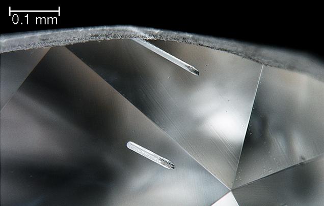 Darkfield illumination reveals rod-like inclusions.