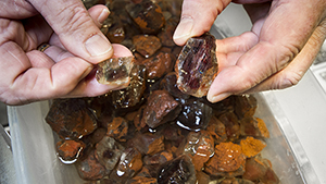 Large sunstone rough from the Ponderosa mine in Oregon