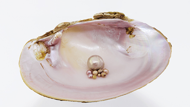 "Nine ""Concho"" pearls with a Tampico pearlymussel shell."