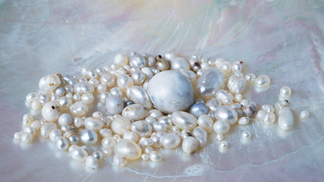 Selection of <i>P. maxima pearls</i> retrieved directly from wild mollusks