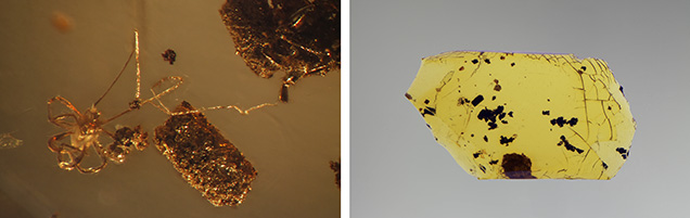 Amber showing mite inclusion under shadowed transmitted and fiber-optic illumination.