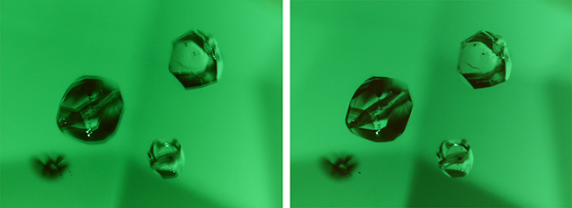 A polarizing filter placed between the objective lens and the subject, which eliminates image doubling in this tourmaline.