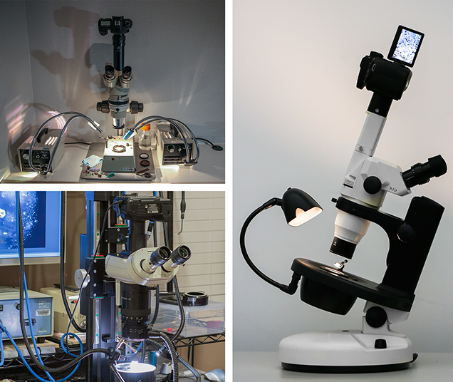 The author's photomicrography equipment, including microscopes, cameras, illuminators, and lenses.