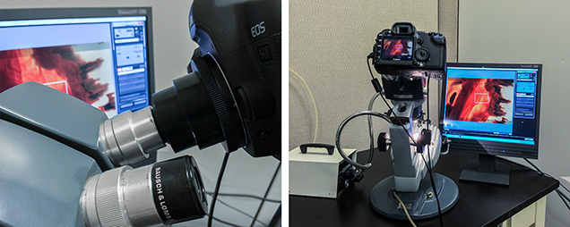 A camera adapter slipped over the microscope's ocular, and the live view shown on a computer monitor.