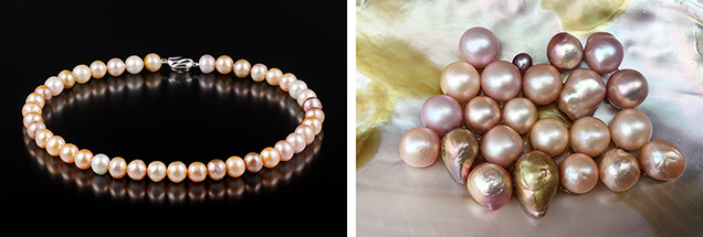 Kasumigaura pearl necklace and recently harvested nucleated pearls