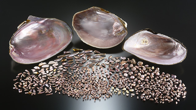 Freshwater pearls from the Mississippi River system with three mussel shells.