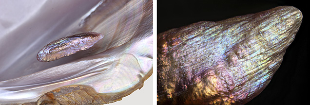 Iridescent surface colors of a pearl and shell.