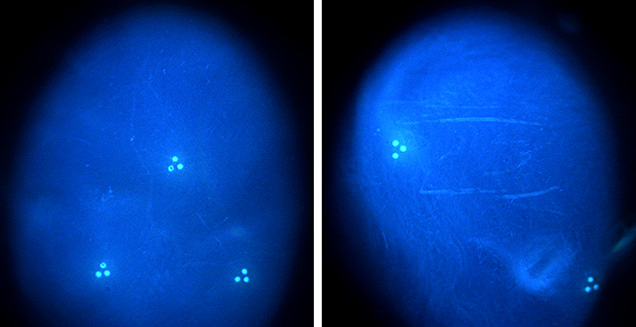 DiamondView imaging of two pearls
