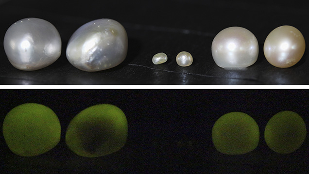 X-ray fluorescence reactions of two pearls